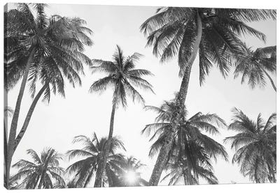 Tropical In Black & White Canvas Art Print