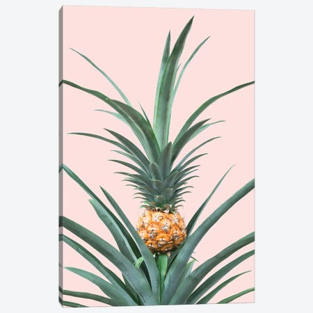 Baby Pineapple Canvas Print #SSE20} by Sisi & Seb Canvas Print