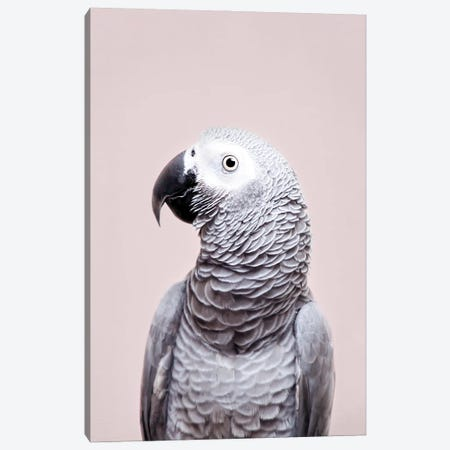 African Grey Canvas Print #SSE217} by Sisi & Seb Canvas Wall Art