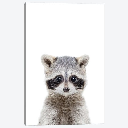 Baby Raccoon Canvas Print #SSE21} by Sisi & Seb Canvas Print