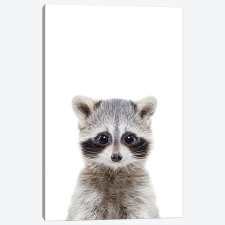 Baby Raccoon Canvas Print #SSE21} by Sisi & Seb Canvas Print
