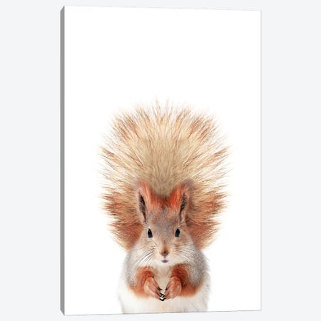 Baby Squirrel Canvas Print #SSE22} by Sisi & Seb Art Print