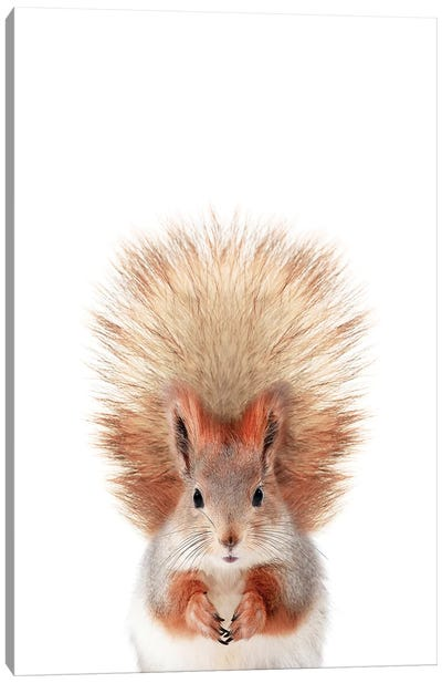 Baby Squirrel Canvas Art Print