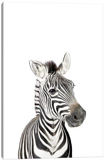 Baby Zebra Canvas Art Print