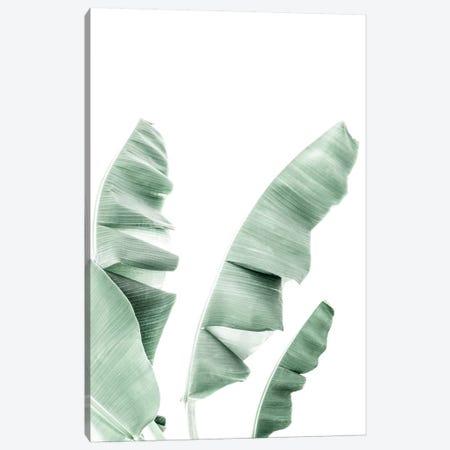 Banana Leaf Canvas Print #SSE24} by Sisi & Seb Canvas Art