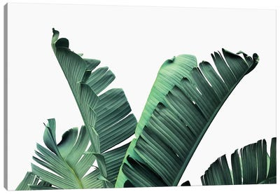 Banana Leaves Canvas Art Print