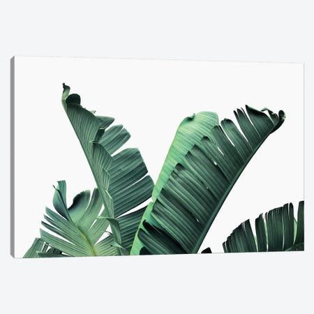 Banana Leaves Canvas Print #SSE26} by Sisi & Seb Canvas Artwork