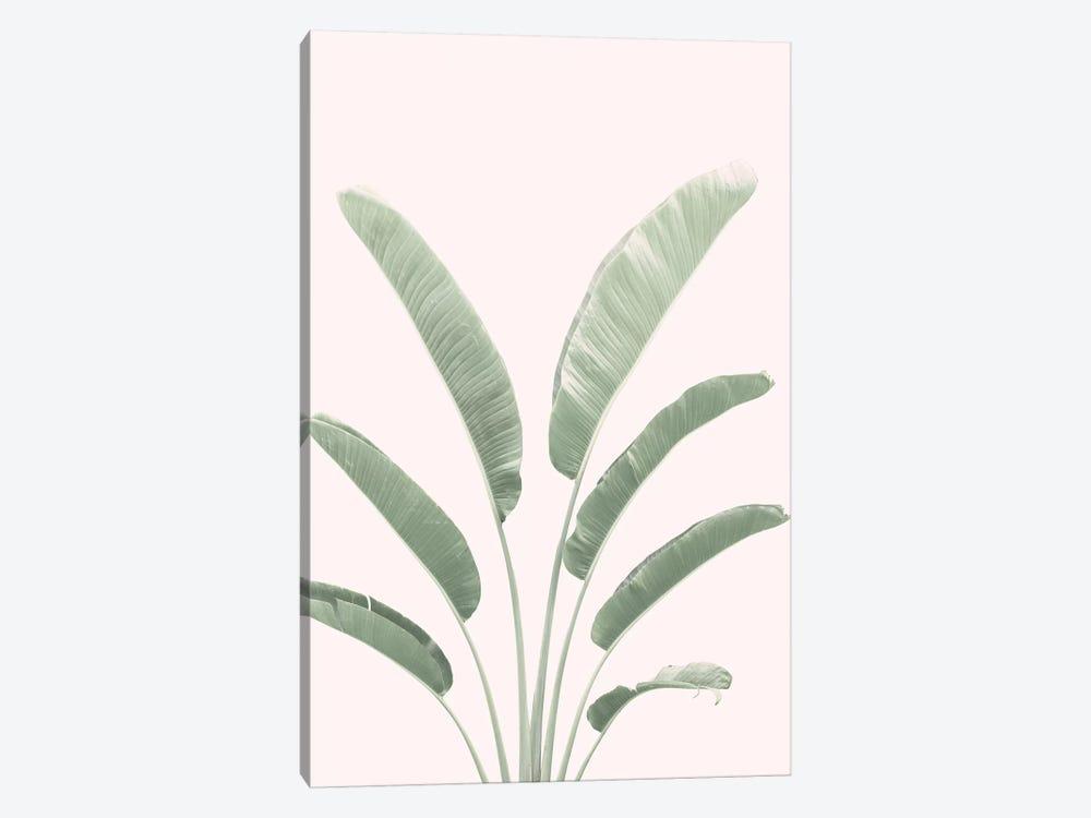 Banana Leaves Blush by Sisi & Seb 1-piece Canvas Print