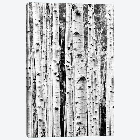 Birch In Black & White Canvas Print #SSE32} by Sisi & Seb Canvas Wall Art