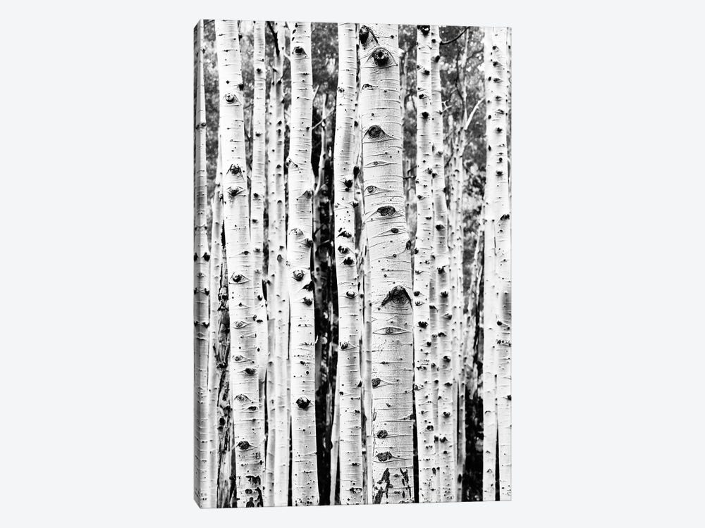 Birch In Black & White by Sisi & Seb 1-piece Art Print
