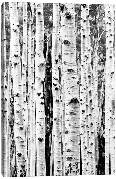 Birch In Black & White Canvas Art Print