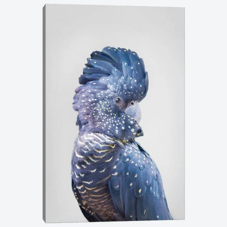 Black Cockatoo Canvas Print #SSE36} by Sisi & Seb Canvas Print