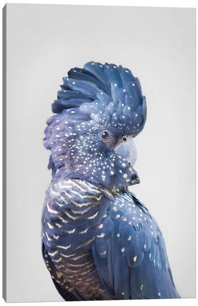 Black Cockatoo Canvas Art Print