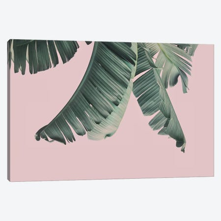 Blush Banana Leafs Canvas Print #SSE37} by Sisi & Seb Canvas Art Print