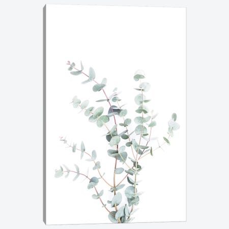 Botanical I Canvas Print #SSE42} by Sisi & Seb Art Print
