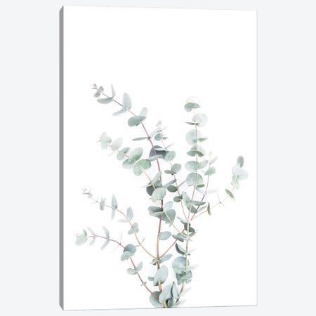 Botanical I Canvas Print #SSE42} by Sisi & Seb Art Print
