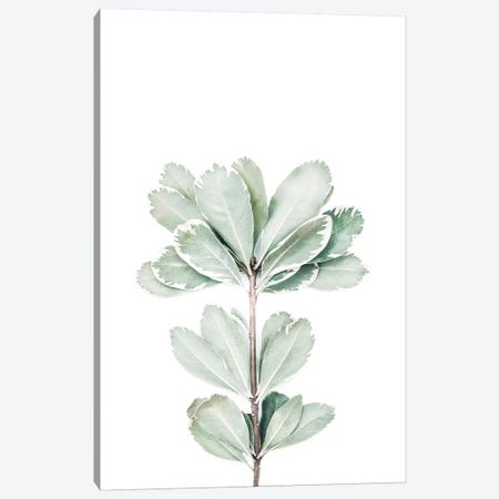 Botanical II Canvas Print #SSE43} by Sisi & Seb Canvas Print