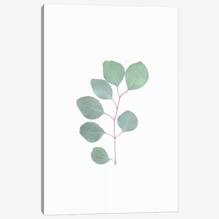 Botanical Leaf Canvas Print #SSE45} by Sisi & Seb Canvas Artwork