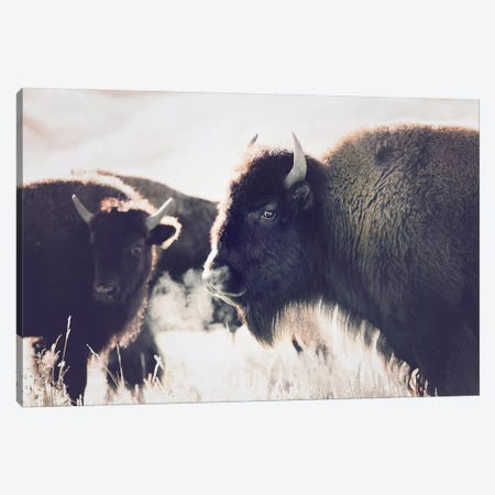 Buffalo Canvas Print #SSE48} by Sisi & Seb Art Print