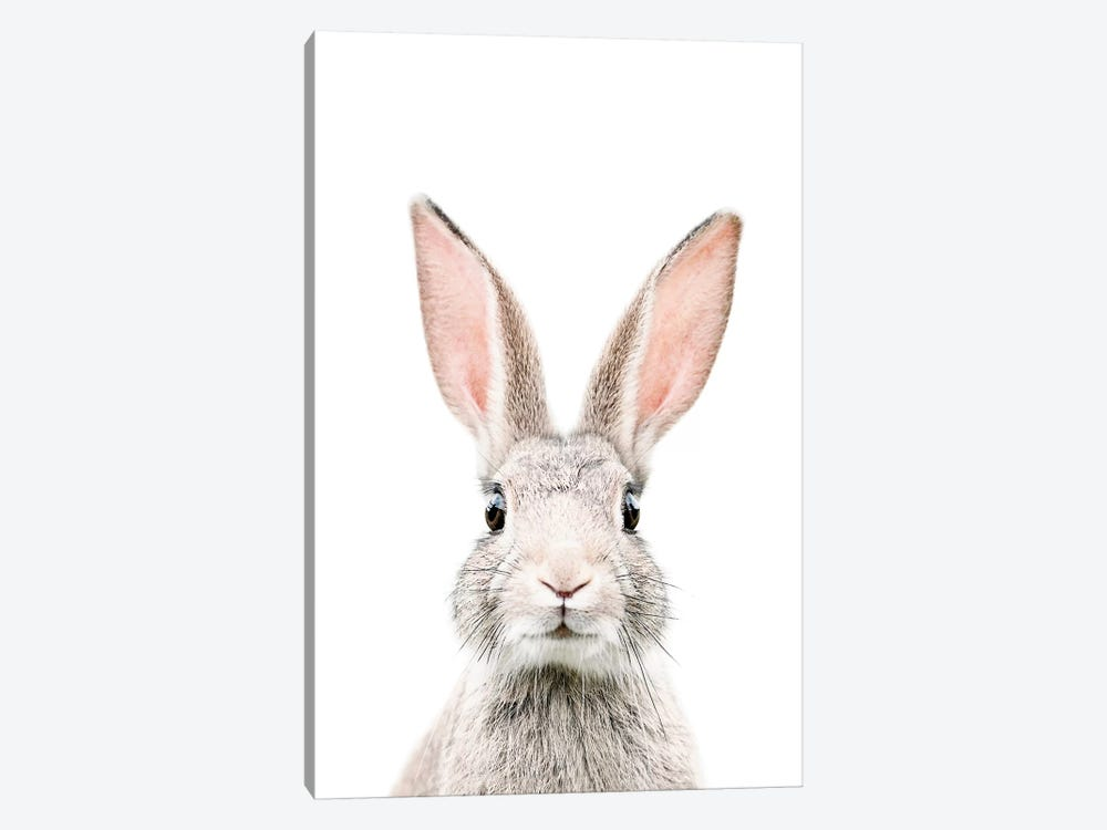 Bunny by Sisi & Seb 1-piece Canvas Print