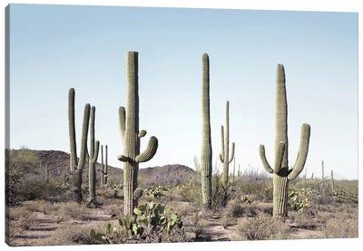 Cactus Land Canvas Art Print