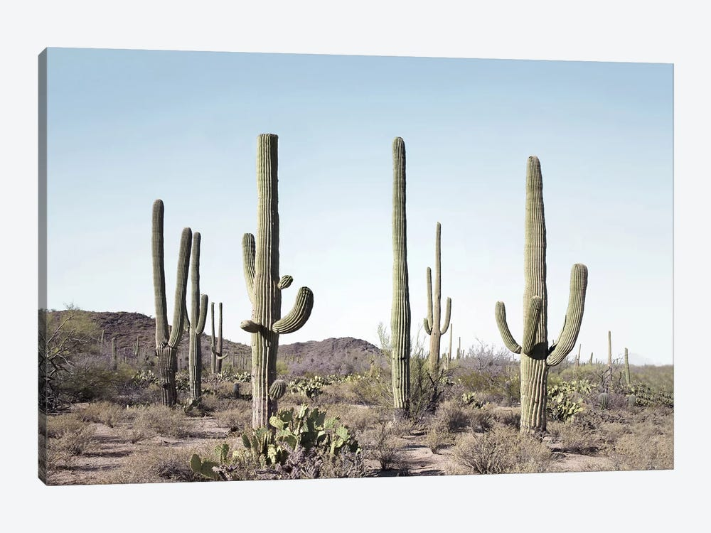 Cactus Land by Sisi & Seb 1-piece Canvas Art Print