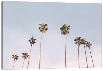 California Trees Canvas Art Print