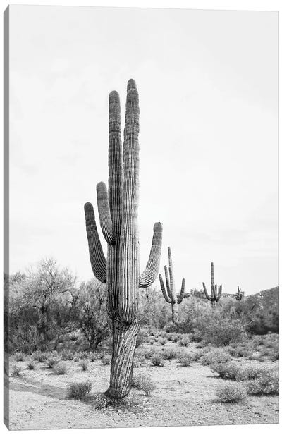 Desert Cactus In Black & White Canvas Art Print