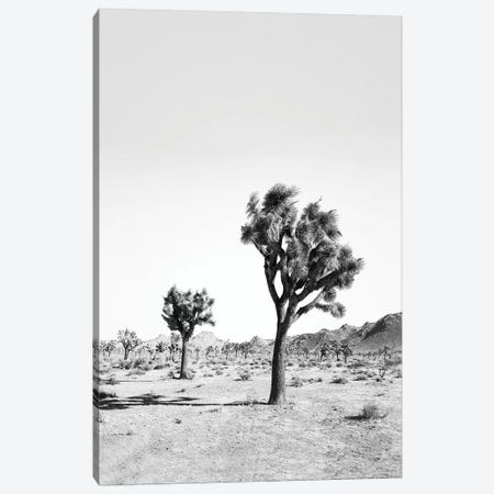 Desert Tree In Black & White Canvas Print #SSE63} by Sisi & Seb Art Print