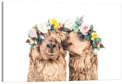 Drama Llamas Canvas Art Print