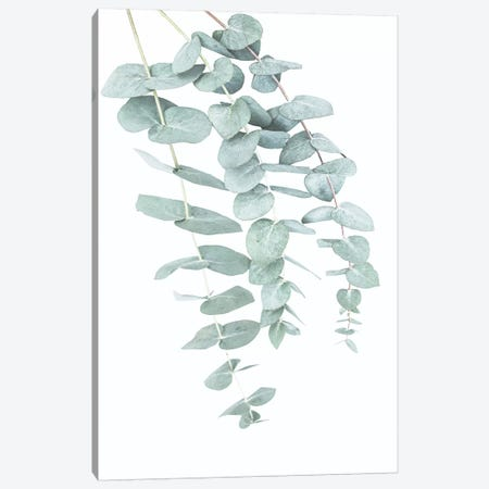 Eucalyptus II Canvas Print #SSE66} by Sisi & Seb Canvas Wall Art