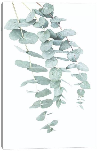 Eucalyptus II Canvas Art Print