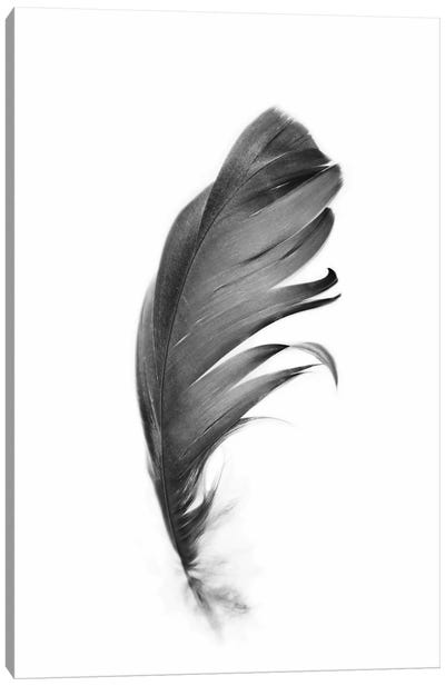 Feather Canvas Art Print