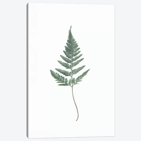 Fern Canvas Print #SSE69} by Sisi & Seb Canvas Art Print
