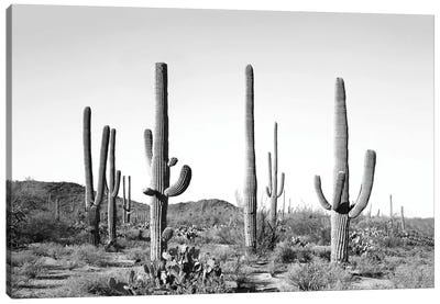 Gray Cactus Land Canvas Art Print