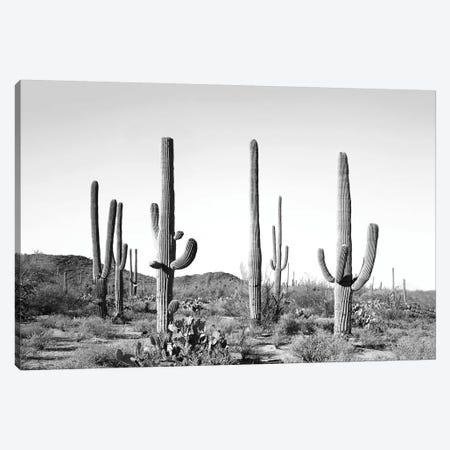 Gray Cactus Land 3-Piece Canvas #SSE77} by Sisi & Seb Art Print