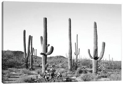 Gray Cactus Land Canvas Art Print