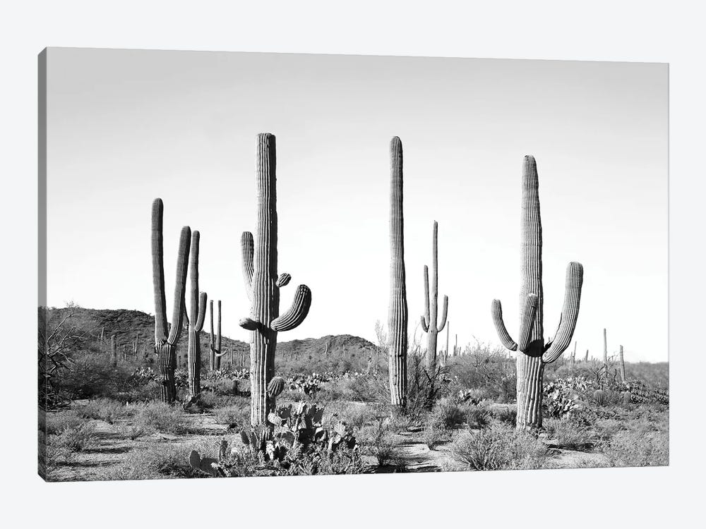Gray Cactus Land 1-piece Canvas Art