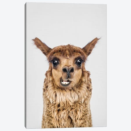 Happy Alpaca Canvas Print #SSE81} by Sisi & Seb Canvas Art Print