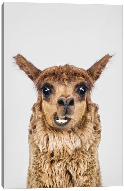 Happy Alpaca Canvas Art Print