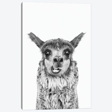 Happy Alpaca In Black & White Canvas Print #SSE82} by Sisi & Seb Canvas Print
