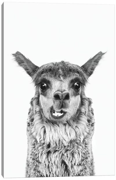 Happy Alpaca In Black & White Canvas Art Print