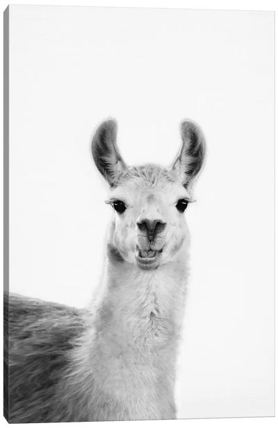 Happy Lama Canvas Art Print