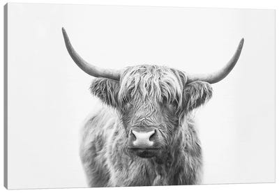 Highland Bull Canvas Art Print