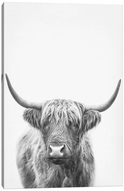 Highland Bull II Canvas Art Print