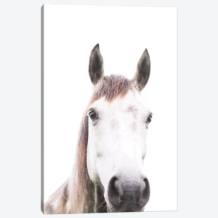 Horse Canvas Print #SSE91} by Sisi & Seb Canvas Artwork