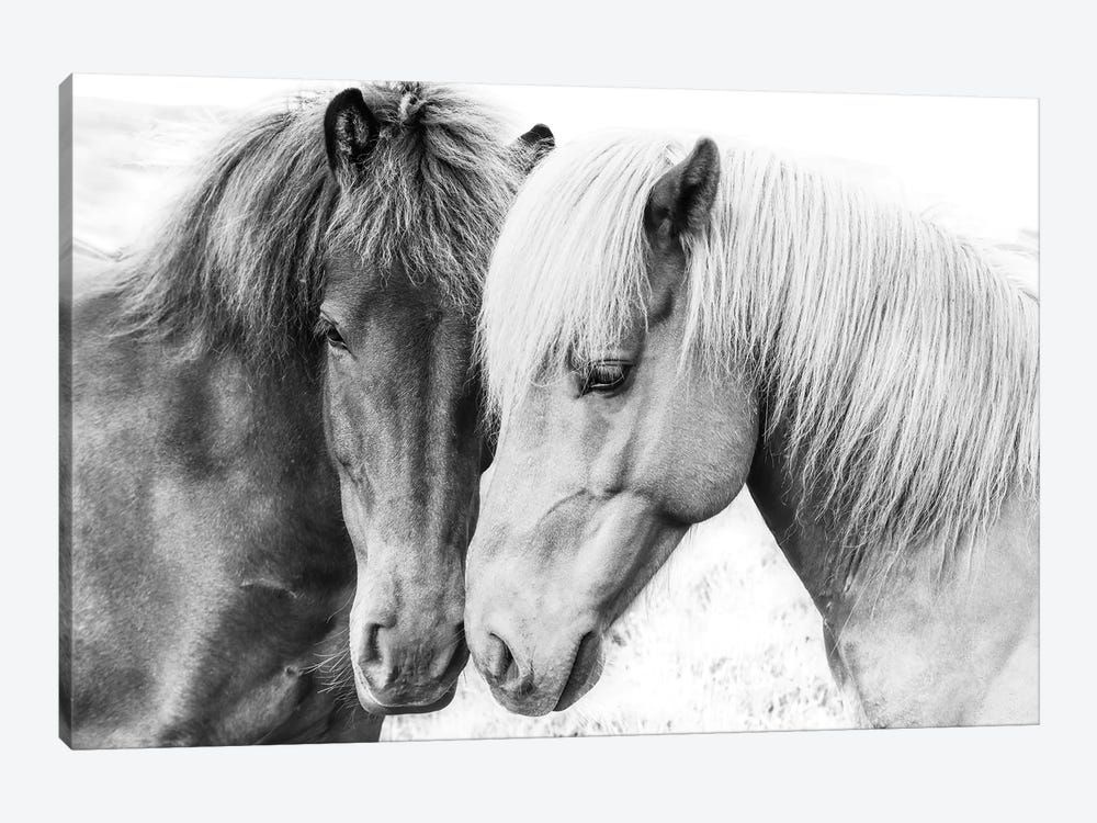 Horse Love by Sisi & Seb 1-piece Canvas Print