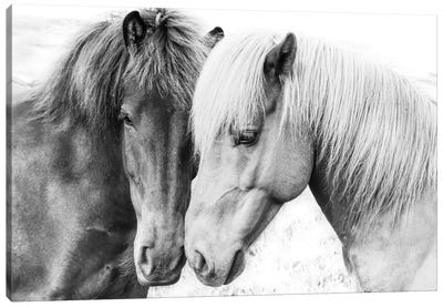 Horse Love Canvas Art Print