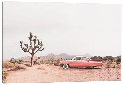 In the desert Canvas Art Print