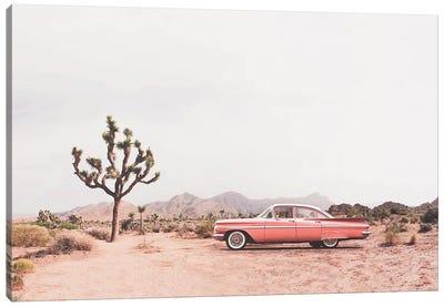 In the desert Canvas Art Print